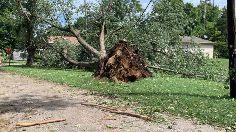 The storm hit around 5:30am and knocked down trees all over town.