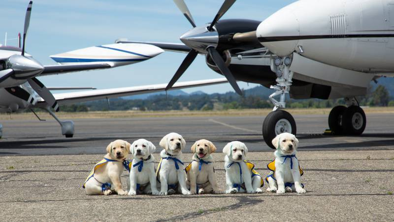 After 18 months, the puppies will begin professional training.