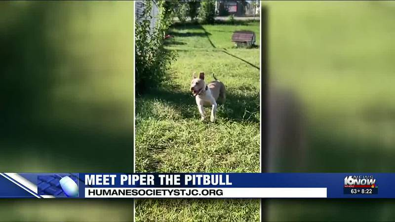 Piper the Pitbull is our 2nd Chance Pet this week!