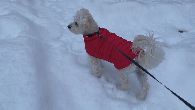 As dangerous temperatures continue in Michiana, we want to make sure your pets stay safe in the...