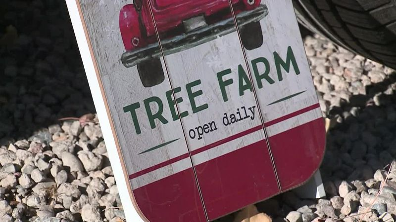 A New Mexico Christmas tree lot is offering 'pay what you can' Christmas trees and will give...