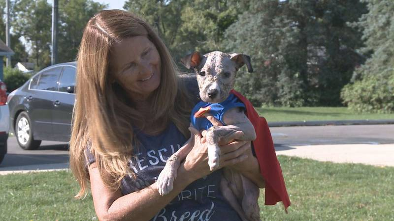 A Marshall County Dog named Mango is taking steps towards recovery after it was abused and then...
