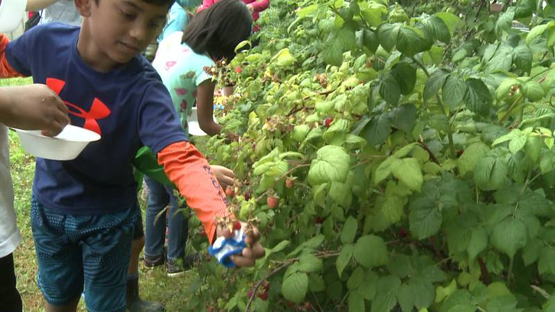Some youngsters from the Robinson Center Preschool are learning how Green Bridge Growers turn...