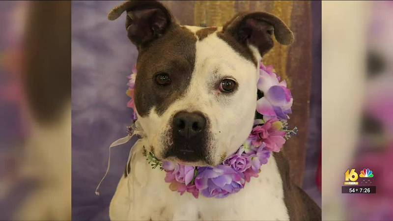 This week in our 2nd Chance segment, we're highlighting a dog from the Humane Society of...