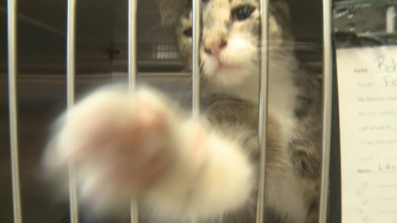 July is a very busy month for the Humane Society of Elkhart County. Just in the past week,...