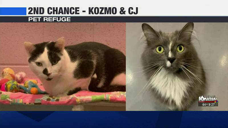 This week in our 2nd Chance segment, we're highlighting two cats from Pet Refuge.