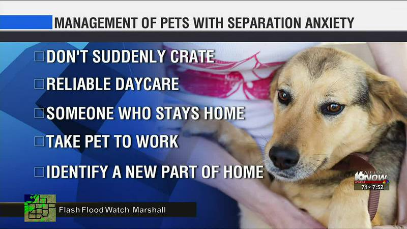 Recent polling indicates that about 10% of U.S. adults adopted a new pet last year. Our Pet...