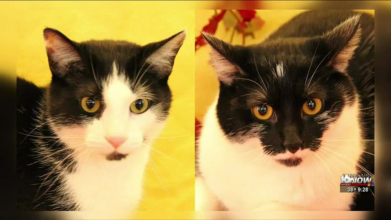 This week in our 2nd Chance segment, we're highlighting two cats from the Humane Society of...