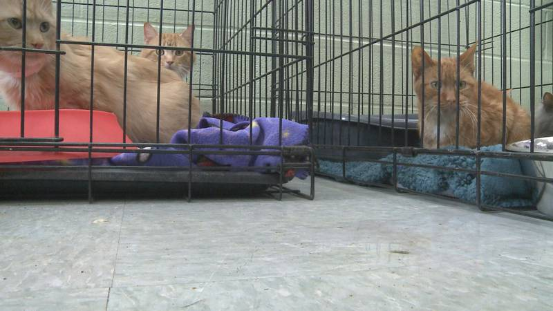 Nineteen cats are looking for a second home after someone left them outside the Michiana Humane...