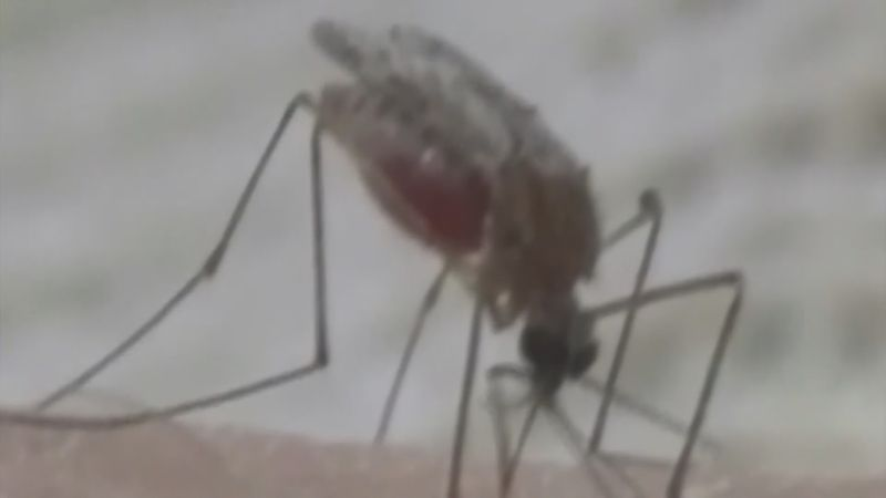 Mosquitoes can carry life-threatening, and even deadly, diseases.