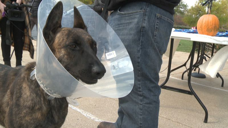 K9 Luna will make full recovery after bullet removed from leg