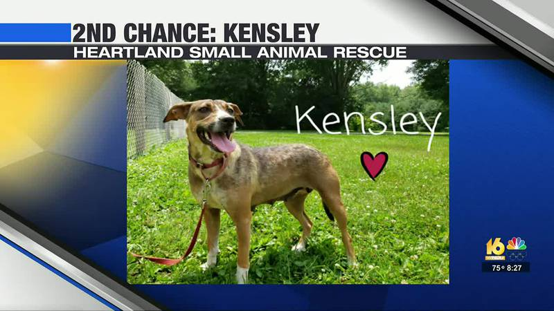 This week in our 2nd Chance segment, we're highlighting a dog from Heartland Small Animal Rescue.