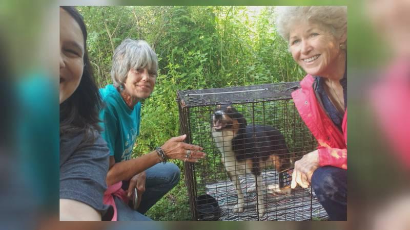Team effort to rescue stray dog