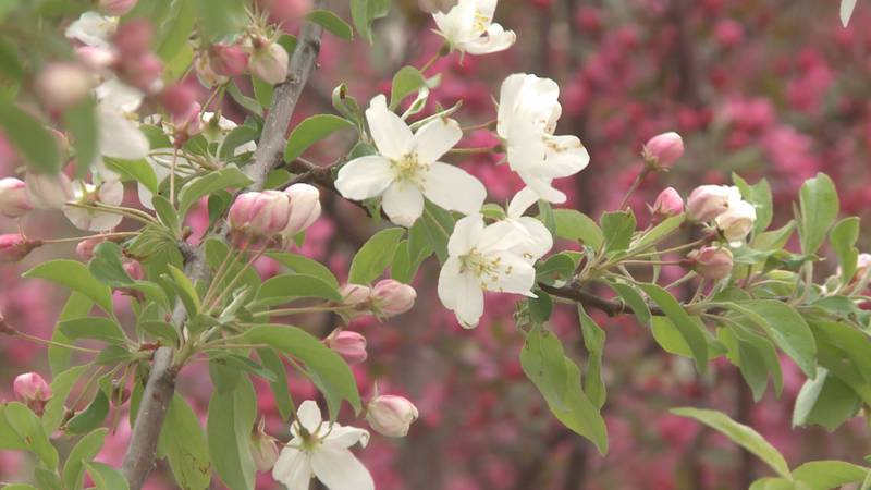 The cold weather will threaten blossoming plants.